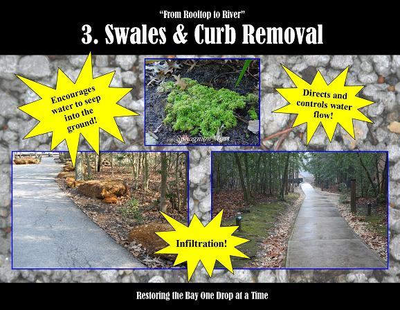 Swale_and_curb_cut_SM